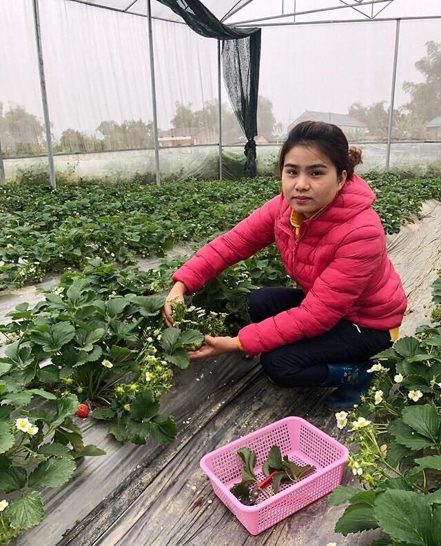 Nữ Thạc sĩ 9X người Tày trồng dâu tây, hoa hồng cho doanh thu 2 tỷ đồng/năm - 2
