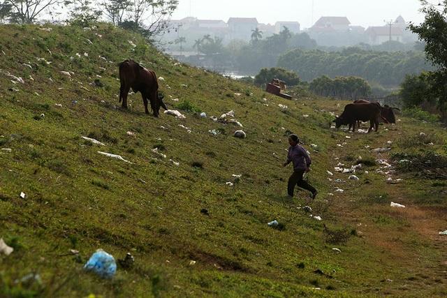 Báo động tình trạng ngập rác thải nhựa tại đê Hữu Hồng  - 11