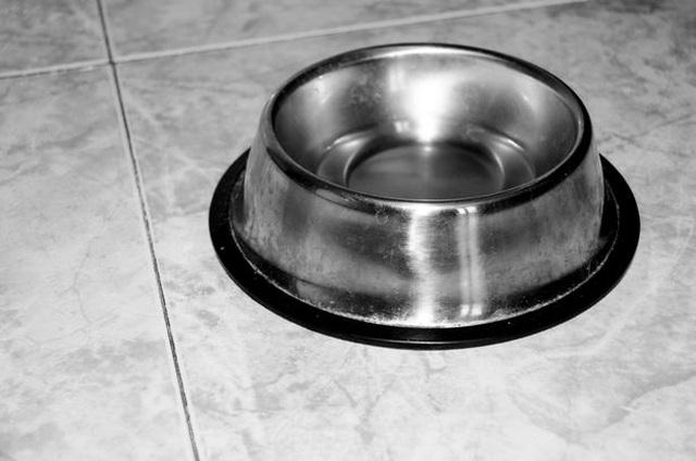 Chồng đi tù vì bắt vợ ăn đồ trong bát của chó - 1