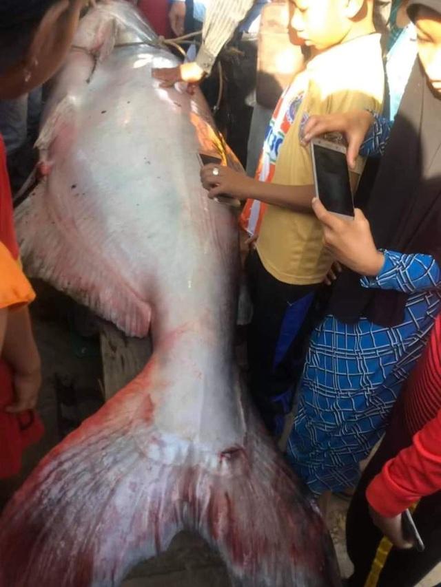 Nông dân An Giang bắt được cá quý 230kg, bán 46 triệu đồng - 3