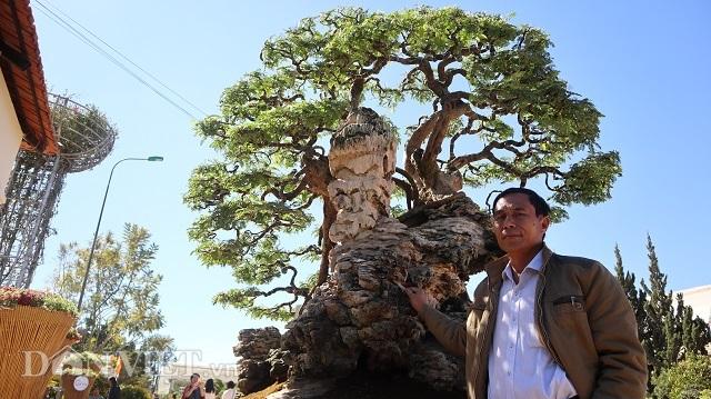 Đồng Nai: Cây me khủng 60 năm tuổi đã kết trái vẫn còn ra hoa - 10