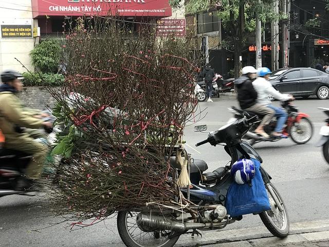 Dân Hà Nội chơi đào sớm, chi nửa triệu đồng cho 1 cành - 3