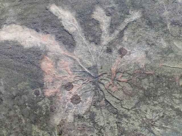 Khu rừng hóa thạch lâu đời nhất thế giới vừa được tìm thấy ở New York - 1