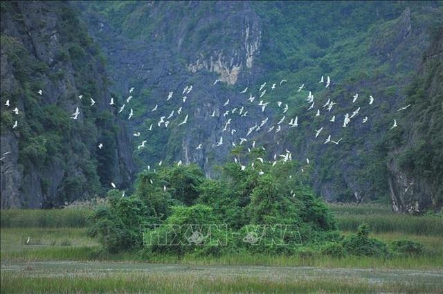 Mùa chim di trú trên đầm Vân Long, Ninh Bình - 1