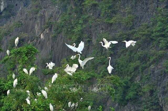 Mùa chim di trú trên đầm Vân Long, Ninh Bình - 6