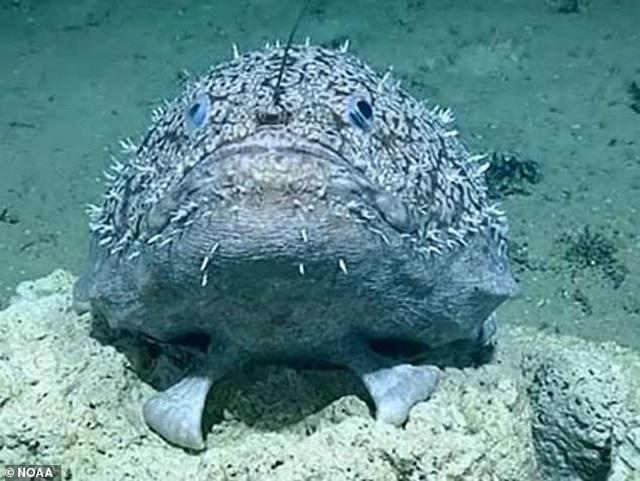 Phát hiện loài cá dùng vây để đứng như đôi chân - 2