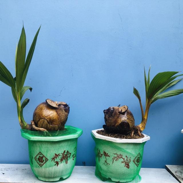 """Bonsai dừa """"kỳ lạ"""" có hình chuột, làm ngàn cây vẫn """"cháy"""" hàng dịp Tết - 1"""