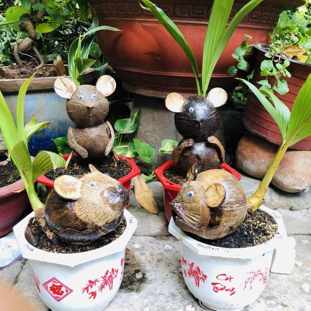 """Bonsai dừa """"kỳ lạ"""" có hình chuột, làm ngàn cây vẫn """"cháy"""" hàng dịp Tết - 4"""