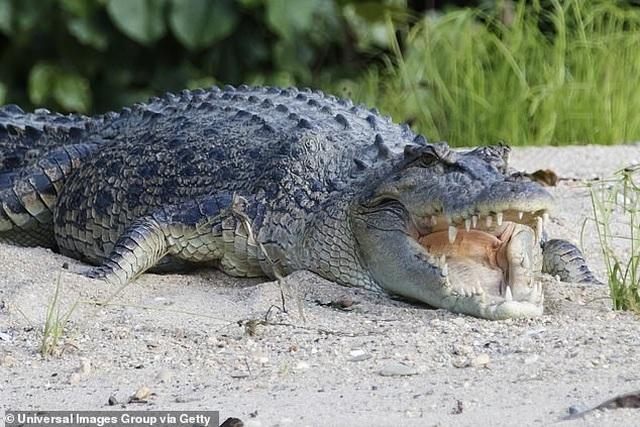 Du khách mất tích không dấu vết trong rừng đầy cá sấu - 3