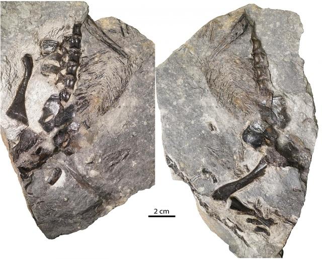 Hóa thạch thằn lằn 300 triệu năm tuổi được tìm thấy ở Canada - 1