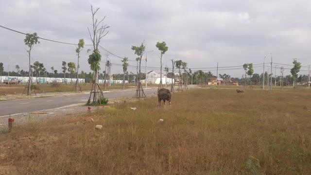 Quảng Ngãi: Lo ngại người dân bị lừa đảo khi mua đất nền  - 2