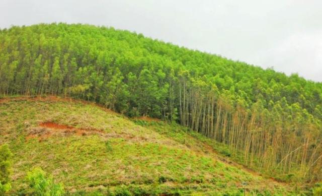 """Bình Định: """"Ưu ái"""" khoán đất bảo vệ rừng sản xuất cho người thân? - 2"""