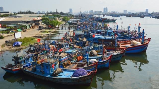 Nỗ lực gỡ thẻ vàng ngành thủy sản: Việt Nam đang đi đúng hướng - 2