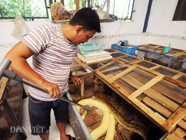 Đột nhập trại nuôi la liệt loài trăn đột biến khủng ở miền Tây - 2