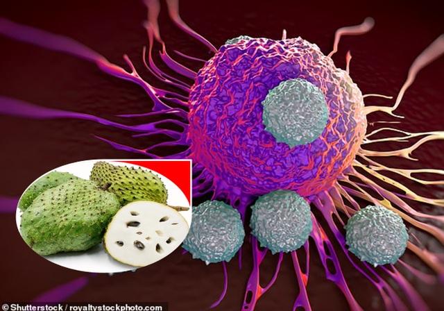 """Mãng cầu xiêm được chứng minh là """"khắc tinh"""" của ung thư - 1"""