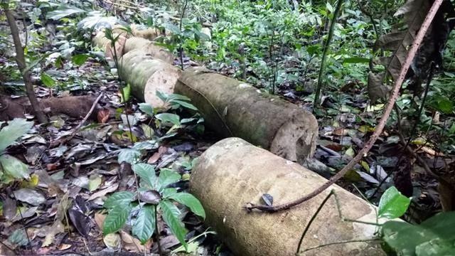 Để phá rừng hàng loạt, nhiều cán bộ kiểm lâm bị kỷ luật cảnh cáo - 1