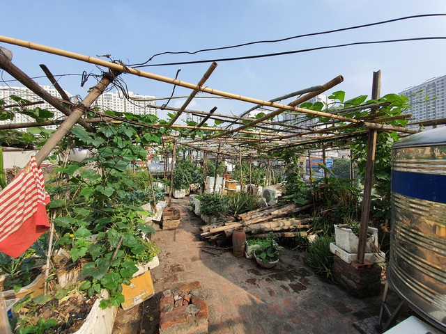 """Độc đáo """"nông trại"""" trồng rau, nuôi gà trên sân thượng, giữa lưng trời ở Hà Nội - 8"""