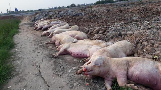 Khủng hoảng chưa từng có, 10 tỷ USD lung lay, triệu dân Việt lo sợ - 2