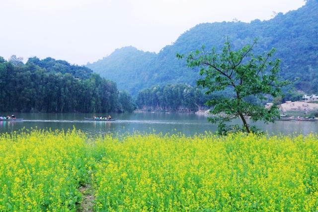 Vườn hoa cải rực vàng đẹp mê hồn khiến du khách nao lòng ở Thung Nham - 1