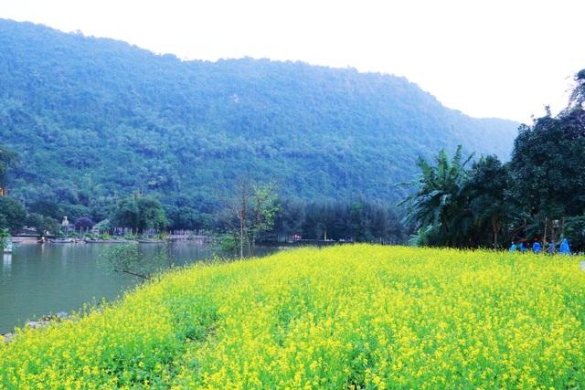 Vườn hoa cải rực vàng đẹp mê hồn khiến du khách nao lòng ở Thung Nham - 21