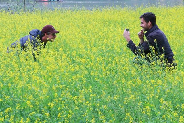 Vườn hoa cải rực vàng đẹp mê hồn khiến du khách nao lòng ở Thung Nham - 15