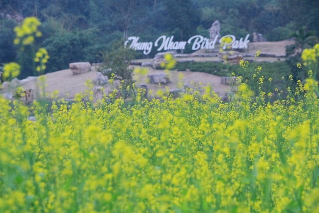 Vườn hoa cải rực vàng đẹp mê hồn khiến du khách nao lòng ở Thung Nham - 10