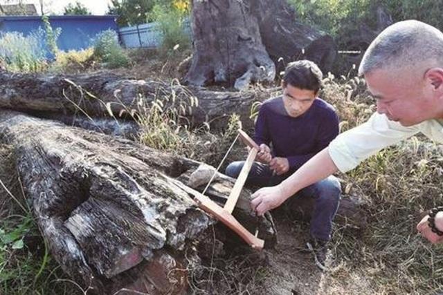 Nhặt khúc gỗ xấu xí vứt ngoài vườn, 5 năm sau mới biết là kho báu hơn 60 tỷ đồng - 1