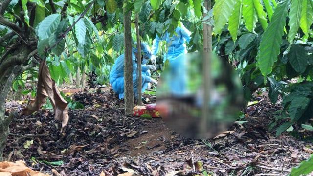 Bắt nghi phạm sát hại người phụ nữ, phi tang xác ở rẫy cà phê - 1