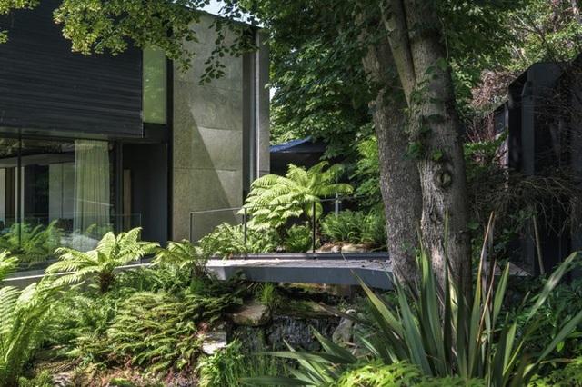 Đã mắt với vẻ đẹp ngôi nhà giữa rừng ngắm mãi không chán - 8