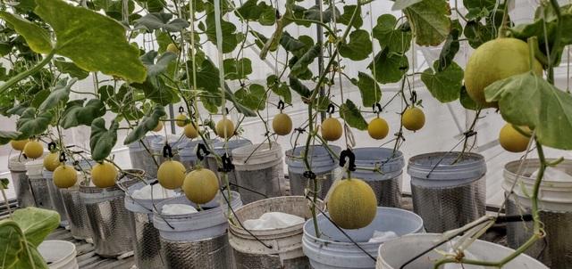 Ông chủ doanh nghiệp Đồng Nai chi 70 triệu trồng rau, nuôi cá trên sân thượng - 7