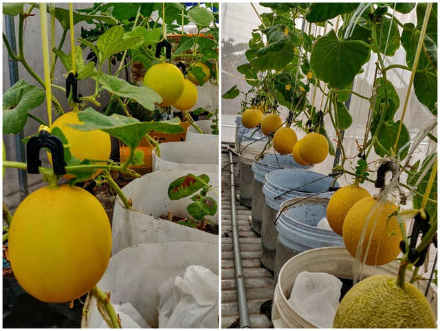 Ông chủ doanh nghiệp Đồng Nai chi 70 triệu trồng rau, nuôi cá trên sân thượng - 8