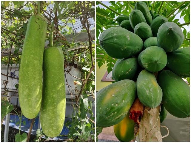 Ông chủ doanh nghiệp Đồng Nai chi 70 triệu trồng rau, nuôi cá trên sân thượng - 5