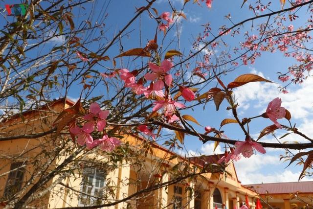 Hoa đào bừng sáng trời đông Mù Cang Chải - 14