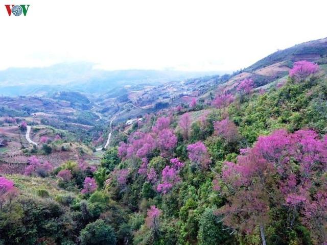Hoa đào bừng sáng trời đông Mù Cang Chải - 18