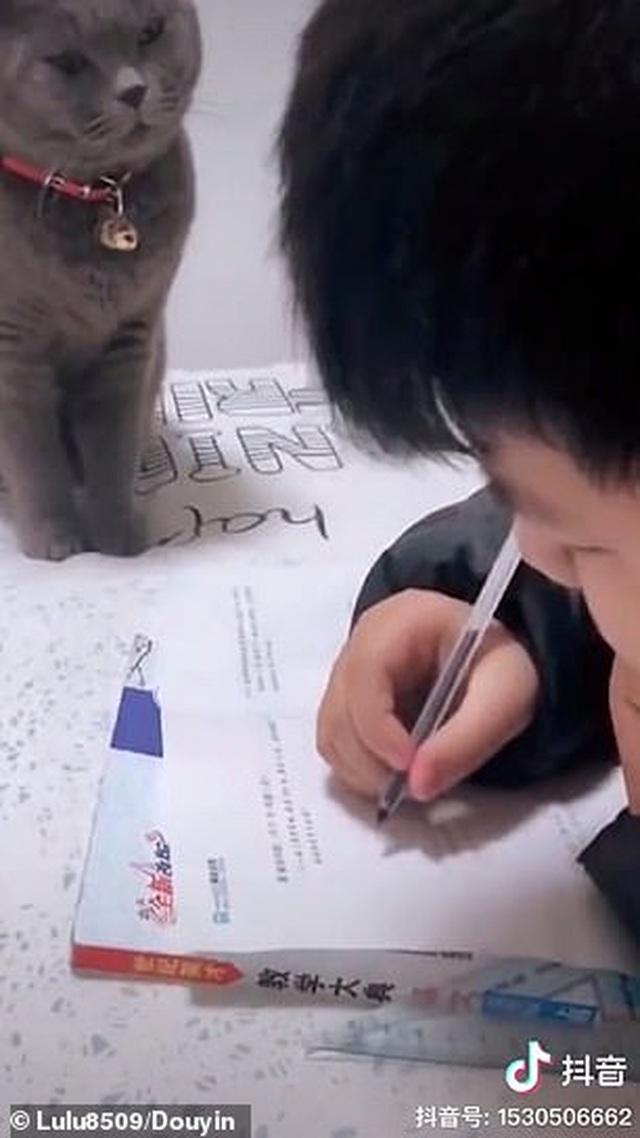 Bật cười trước hình ảnh thầy giáo mèo nghiêm khắc giám sát cậu chủ làm bài về nhà - 1