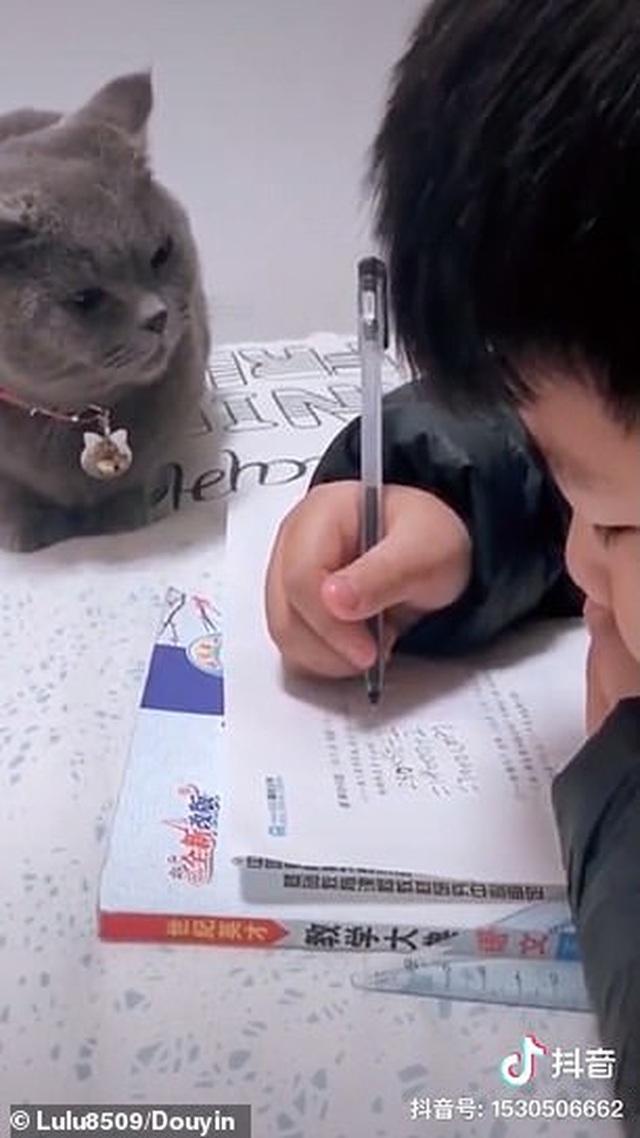 Bật cười trước hình ảnh thầy giáo mèo nghiêm khắc giám sát cậu chủ làm bài về nhà - 2