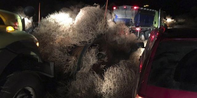 Đường cao tốc tắc nghẽn nhiều giờ vì cỏ bao vây xe tải - 2