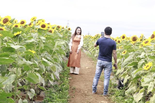 Giới trẻ phố núi nô nức check-in tại vườn hoa hướng dương ngoại ô - 2