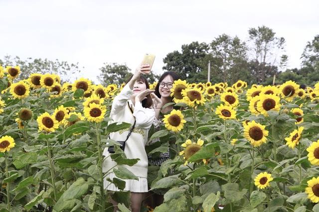 Giới trẻ phố núi nô nức check-in tại vườn hoa hướng dương ngoại ô - 10