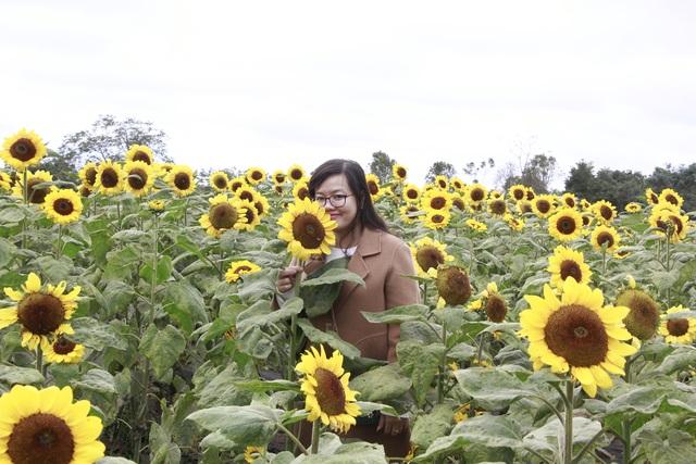 Giới trẻ phố núi nô nức check-in tại vườn hoa hướng dương ngoại ô - 4