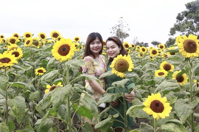 Giới trẻ phố núi nô nức check-in tại vườn hoa hướng dương ngoại ô - 7