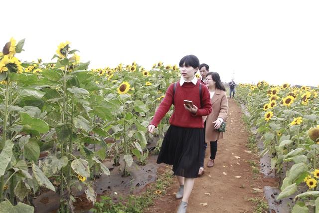 Giới trẻ phố núi nô nức check-in tại vườn hoa hướng dương ngoại ô - 3