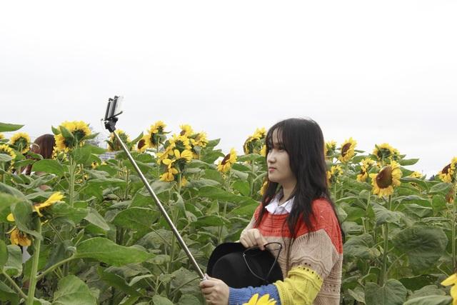 Giới trẻ phố núi nô nức check-in tại vườn hoa hướng dương ngoại ô - 6