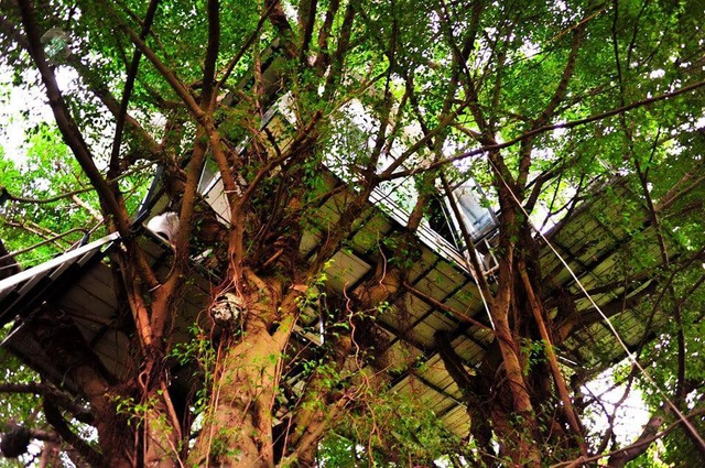 """Cận cảnh những ngôi nhà """"treo mình"""" trên cây, """"độc"""" nhất Việt Nam - 4"""