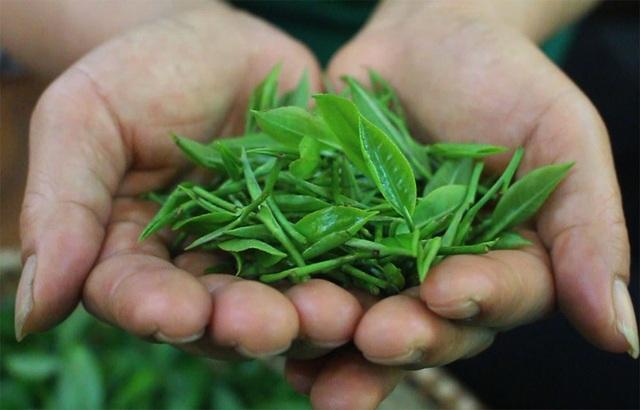 """3 triệu đồng/kg trà đinh, khách xếp hàng mua """"vàng ròng"""" thưởng Tết - 2"""