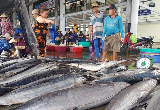 Ngư dân kiếm hơn trăm triệu đồng từ cá ngừ những ngày đầu năm 2020 - 3