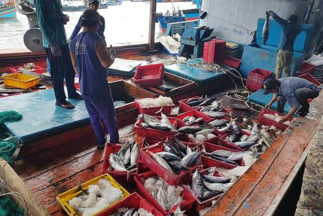 Ngư dân kiếm hơn trăm triệu đồng từ cá ngừ những ngày đầu năm 2020 - 4