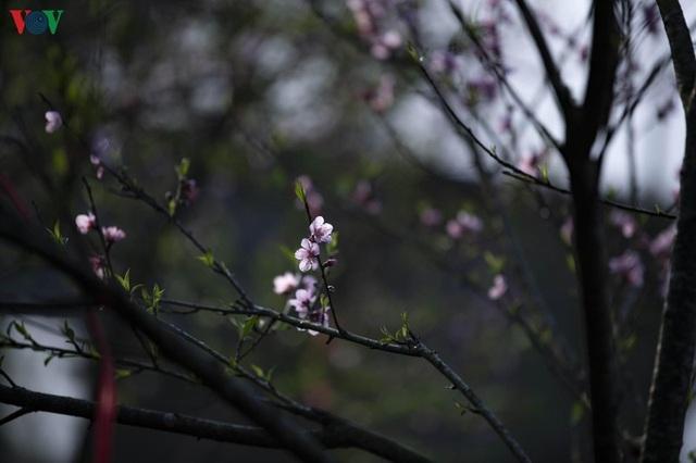 Sa Pa đẹp ngất ngây khi mùa xuân về - 3