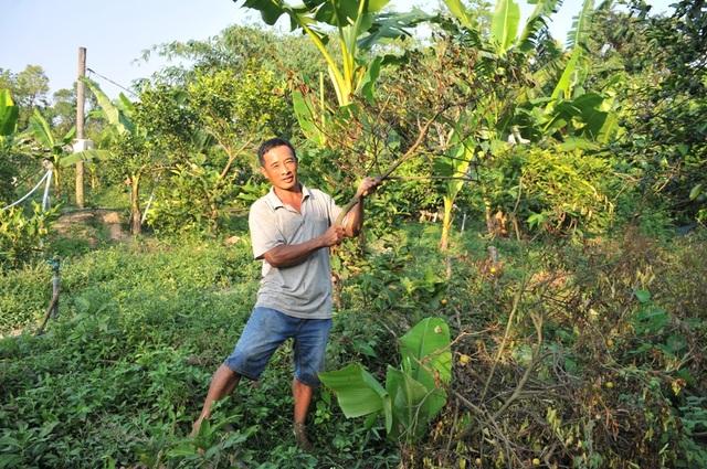 Hàng chục hộ dân trồng quýt mất tết vì chủ vựa trái cây quỵt nợ tại Đồng Tháp - 3