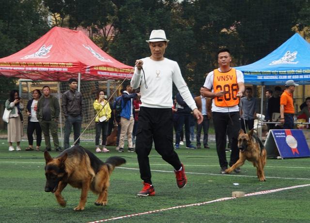 30 chú chó Becgie Đức khoe hình thể ở Hà Nội - 2